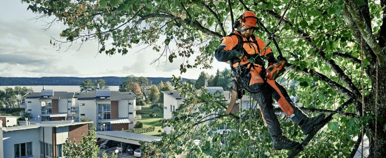 seo for tree surgeons
